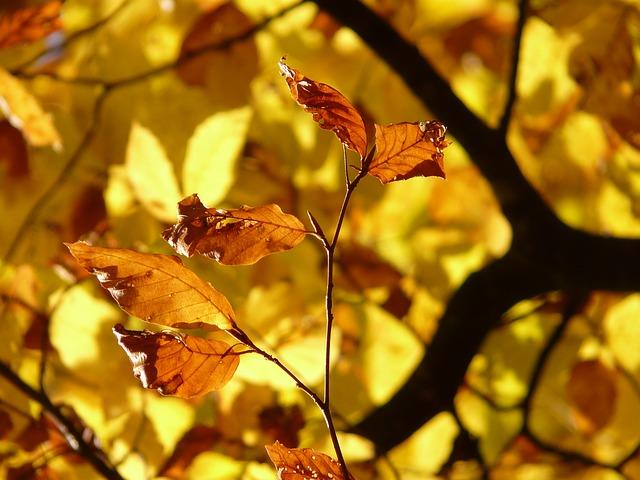 jesien drzewo liscie