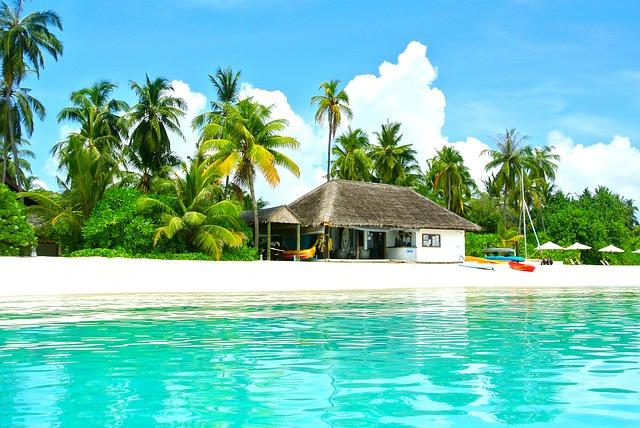 malediwy drzewa kokosowe
