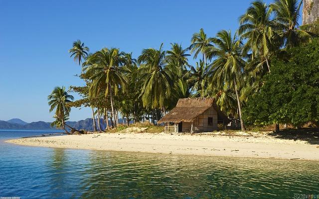 palmy ocean